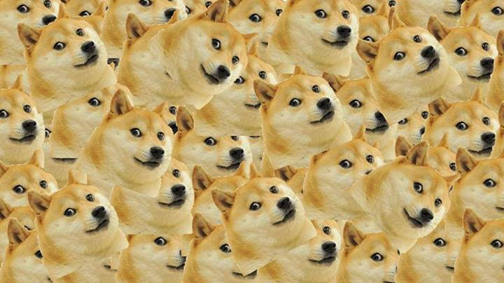 Petition to make Doge Meme illegal.