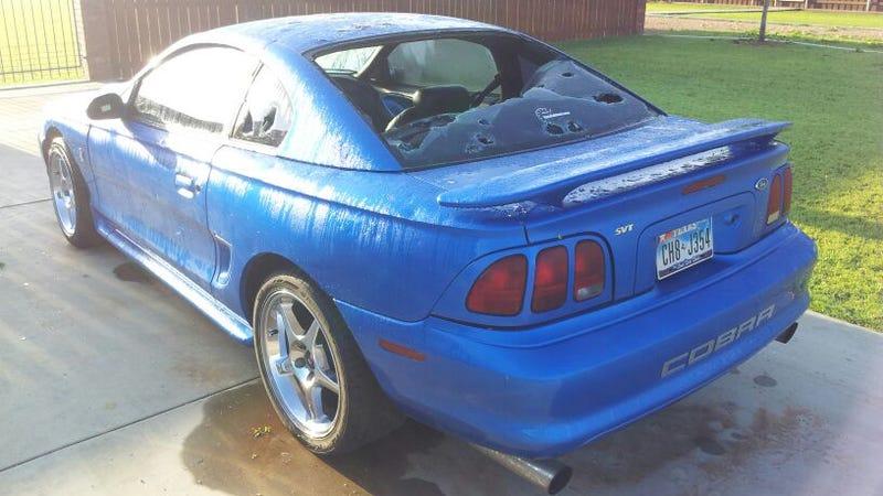 Hail Mustang Cobra Gallery