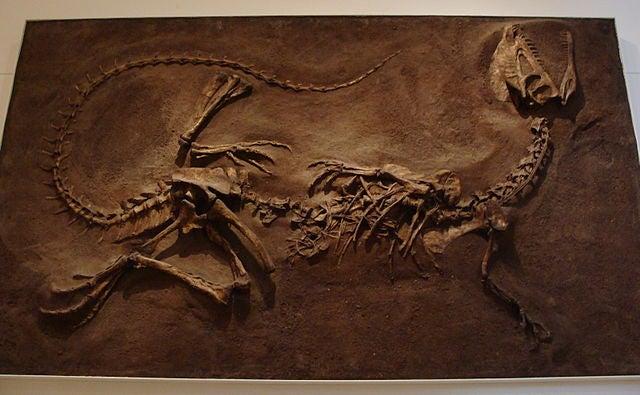 Did Dinosaur Dilophosaurus Really Have Feathers?