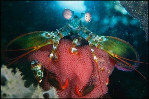 Strange Weapons of Sea Life