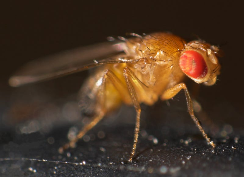 These videos of fly larvae cannibalism may squick you