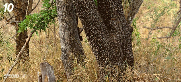 Can you find the leopard hiding in this picture? (You got 10 seconds)