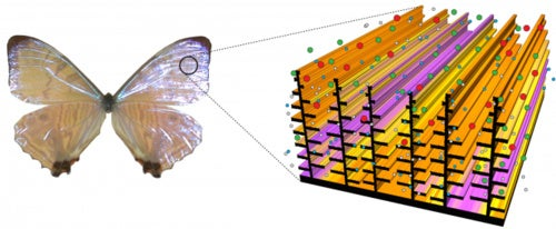 Darpa's Butterfly-Inspired Sensors Light Up at Chemical Threats