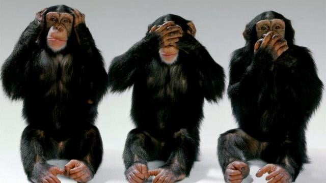 Chimps will follow their leader even when it's the stupid thing to do