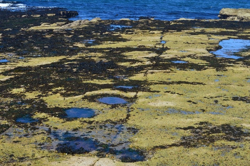 Hundreds of Dinosaur Footprints Found in a Scottish Lagoon
