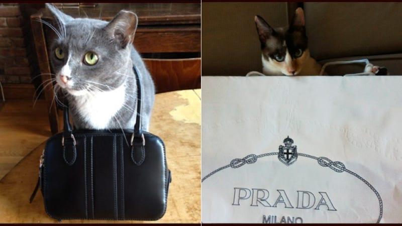 Breaking: It's Cat Week at Vogue.