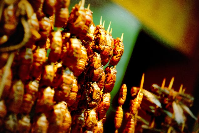Should you really start eating insects?