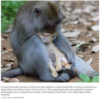 Monkey And Kitten Reenact Eat, Pray, Love