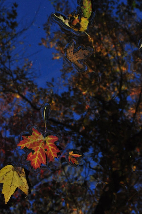 Shooting Challenge Fall Leaves Gallery 4
