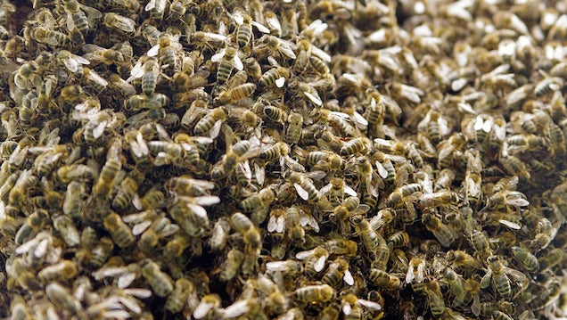 Man Dies After Crashing Car Into Bee-Infested Abandoned House