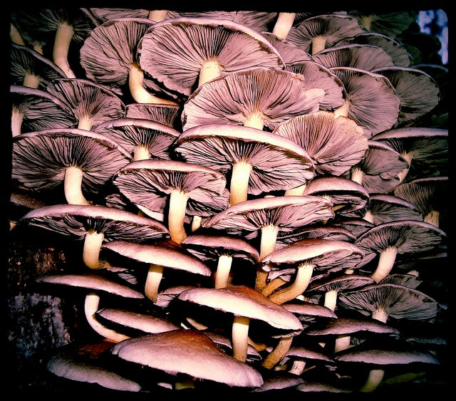 Let's all pause briefly to remember how creepy mushrooms are