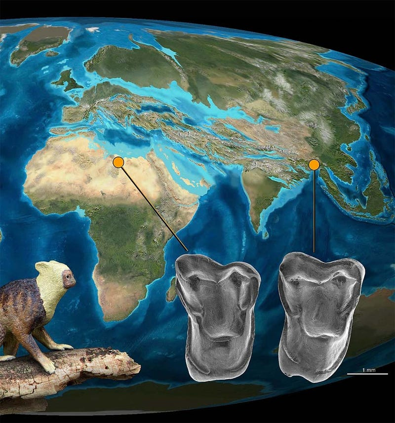 Our ancestors may have originated in Asia, not Africa