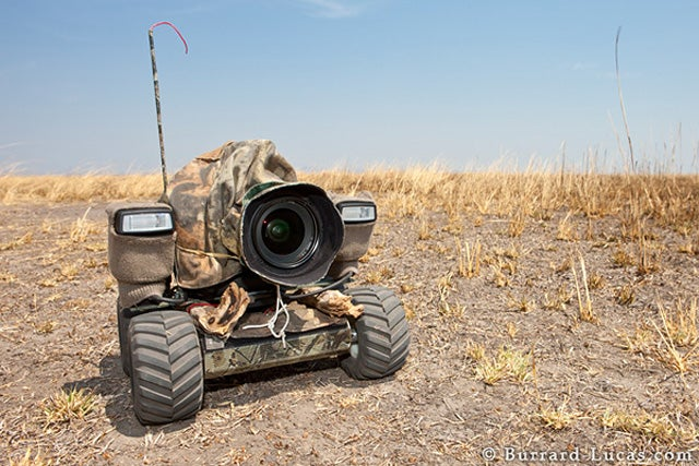 Remote Control DSLR BeetleCam Goes On Ground-Level Photo Safari