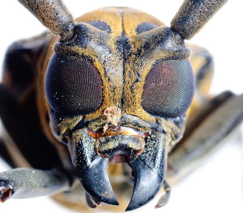 Insect Nervous System Copied To Boost Computing Power