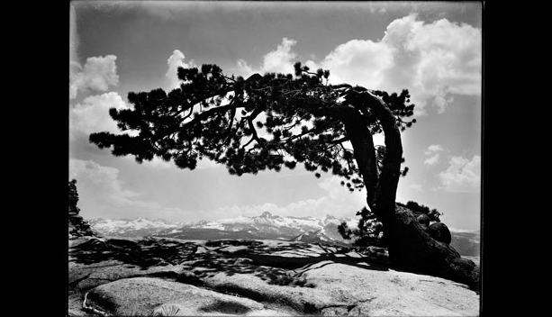 $45 Yard Sale Find Turns Out to Be $200 Million Worth of Lost Ansel Adams' Negatives