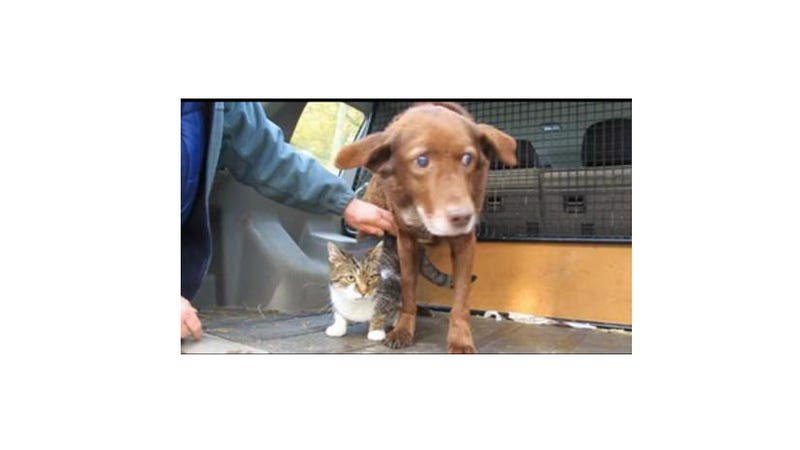 Blind Dog Gets Seeing-Eye Cat, Because the World Is Just and Beautiful After All