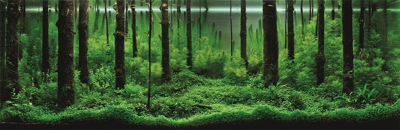 These beautiful natural landscapes are actually aquariums