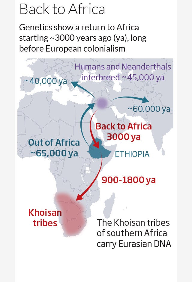 New evidence shows ancient humans moved back to Africa