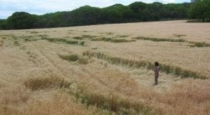 New Crop Circles Stun Argentina
