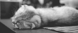 Get Comfy in Your Friday Open Thread
