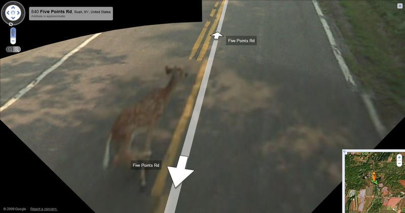 Google Maps Car Hits a Deer, Records Entire Ordeal on Google Maps