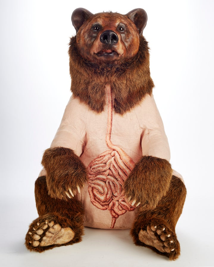 Stuffed bear sculptures embroidered with anatomical designs