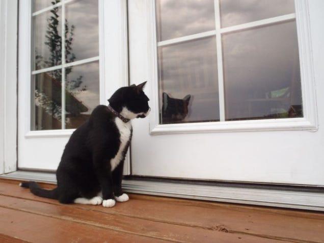 32 Totes Adorbs Photos Of Your Cats