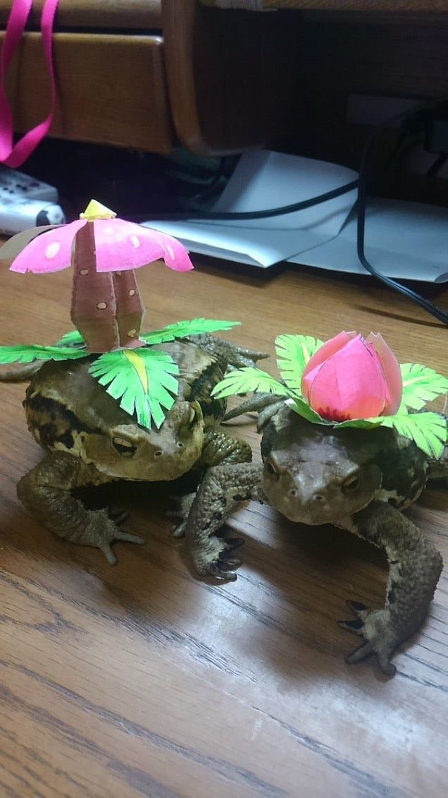 Toads Are Pretty Good at Pokémon Cosplay