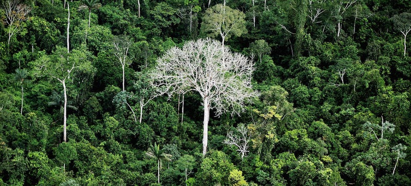 No, Artificial Light Is Not Destroying the Rain Forest (Yet)