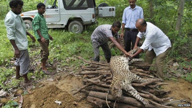 Indian Woman Kills Leopard In Epic Fight To The Death