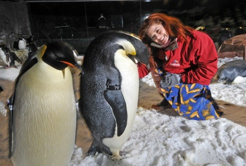 Debra Messing Sees What's Going On Here, Penguin