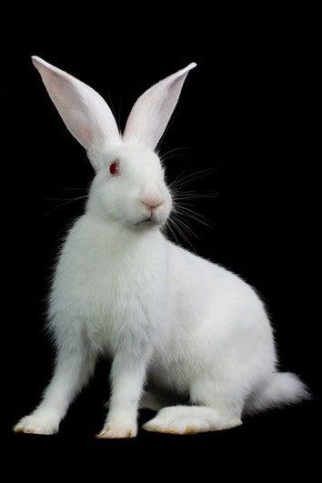 Radioactive Bunny Leaves Behind Dangerous Poo