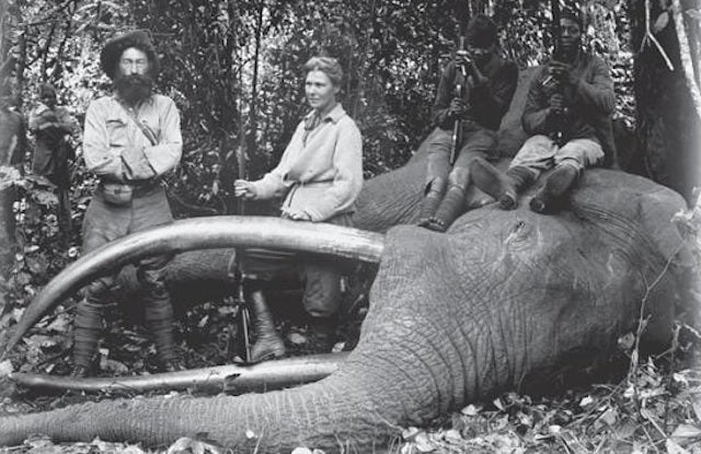 The Woman Who Shot Elephants for America's Natural History Museums