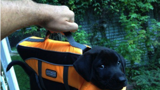 Also, enclosed is a briefcase with lab results