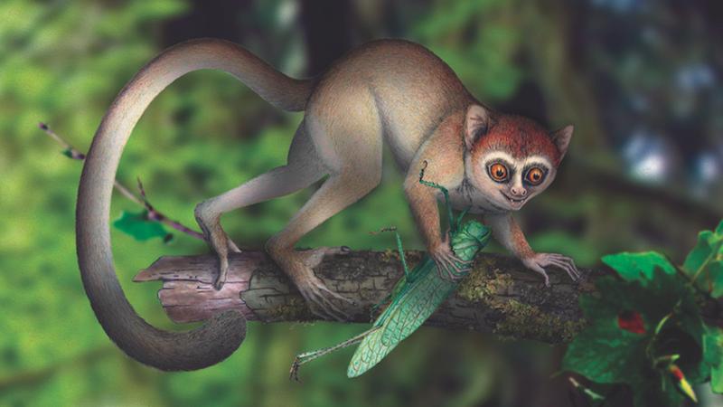 Scientists Just Found the Oldest Primate Skeleton Ever