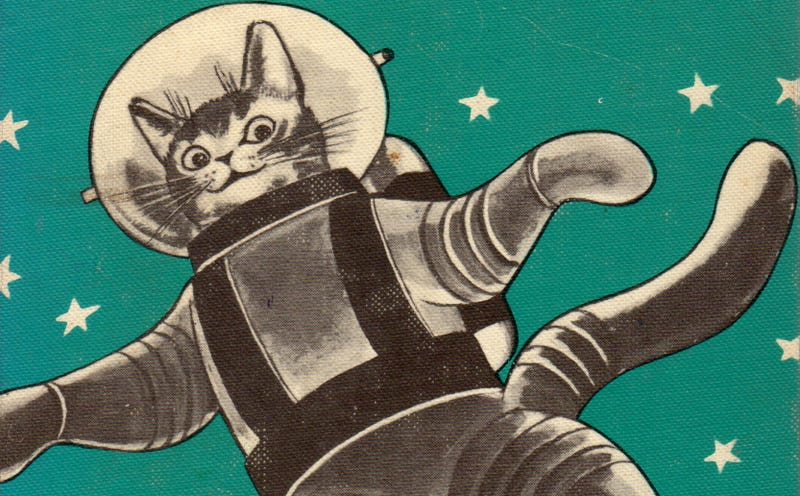 Space Cat IRL: Iran Wants to Launch Persian Cat Into Space