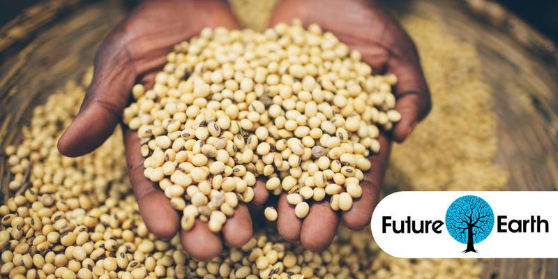 The World's Food Supply Is In Jeopardy But Here's How We Can Save It