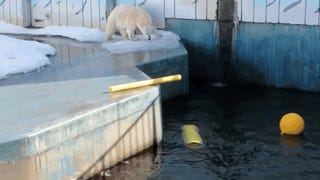 Extra-Cool Polar Bear Discovers Many Ways To Enjoy His Items