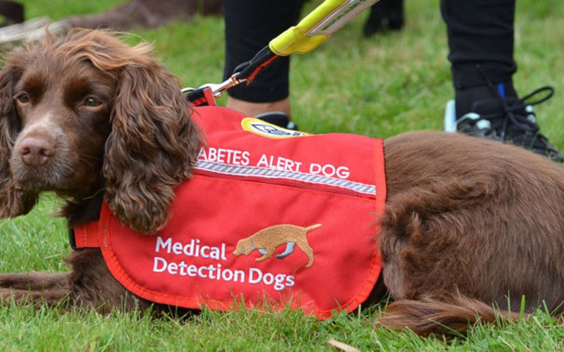 We Finally Know How Dogs Sniff Out Diabetes