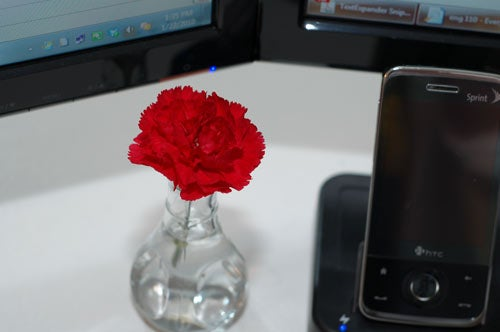 Lifehacker Labs: Flowers in Every Room On The Cheap