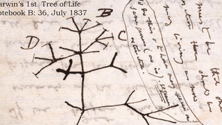 Over 16,000 of Darwin's Papers On Evolution Are Now Available Online