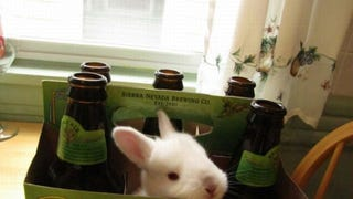 The hoppiest beer