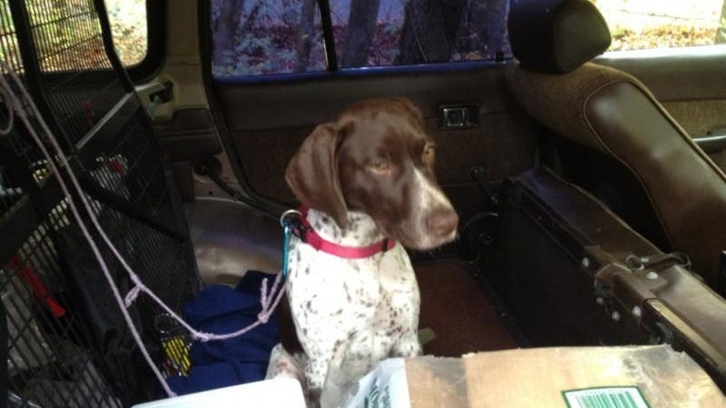 Help Find The Scumbag Who Stole This Land Cruiser With A Dog Inside