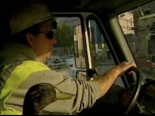 Keep On Duckin': Truck Driver And Duck Become BFFs