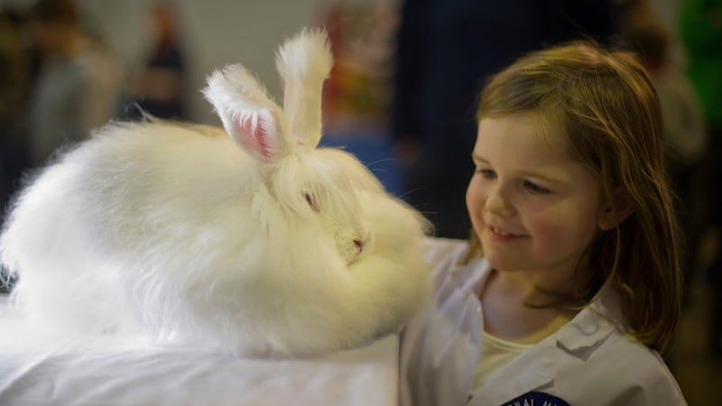 Stores Suspend Angora Fur Sourcing Amid Reports of Rabbit Abuse