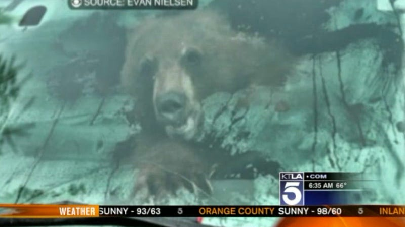Hilarity Ensues When Bear Gets Trapped In Truck, Destroys It