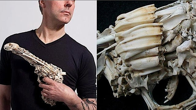 For $1,200, two handguns sculpted out of dead cats' bones