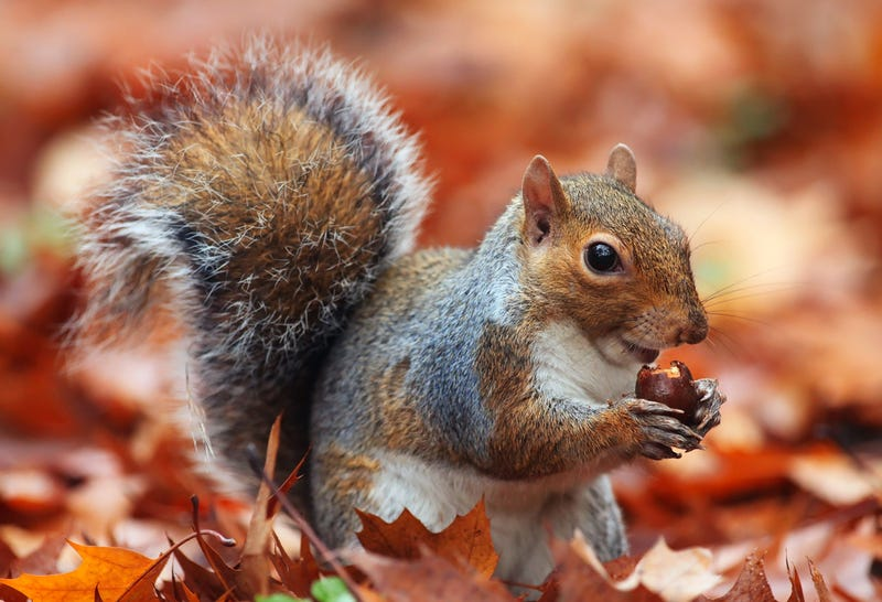 Yale in Uproar Over Missing Campus Squirrels