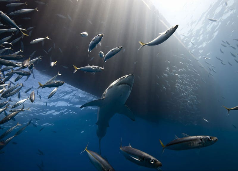 Spectacular winning images from Nat Geo's 2013 travel photo contest