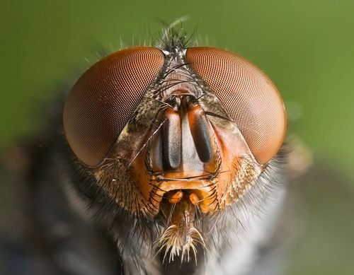 Future Solar Cells Will Be Made From Fly Eyes To Maximize Efficiency